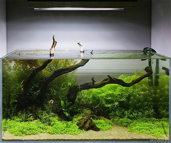 Akwarium Naturalne