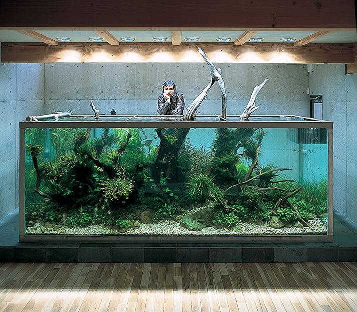 Takashi Amano i jego akwarium