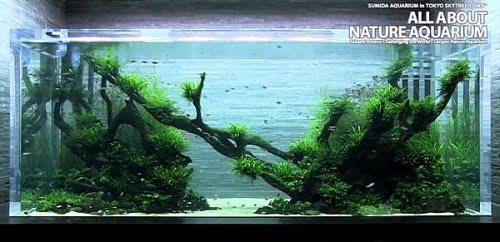 Sumida Aquarium – Takashi Amano