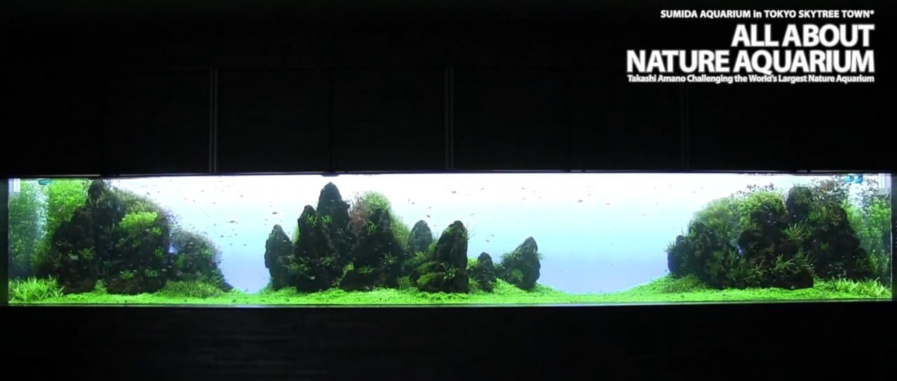 Iwagumi Aquascape In A Massive Tank With Large Rocks.....   The Planted  Tank Forum