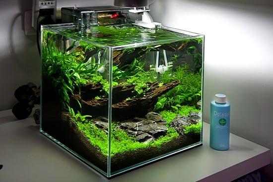 nano akwarium peha68 akwarium w stylu naturalnym
