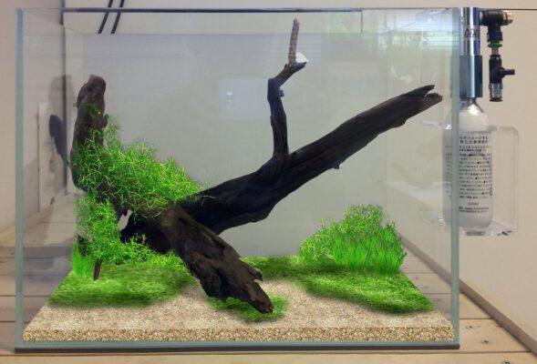 Wirtualna aranżacja akwarium