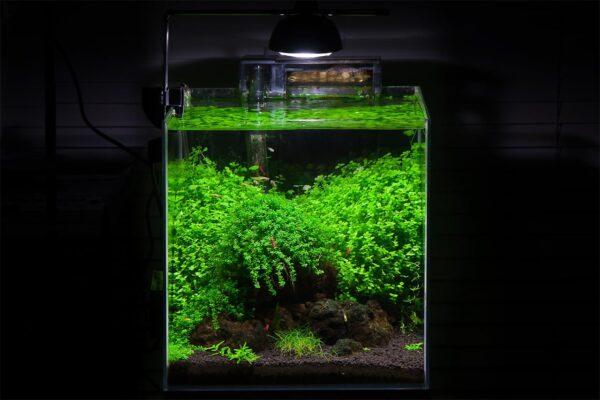 Eheim LED Aqualight 7W
