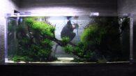 ADA 4m - Sumida Aquarium Tokyo