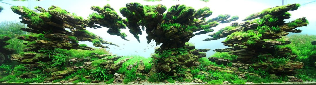 IAPLC 2012 TOP7 AquaScaping World Forum