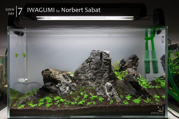 Iwagumi by Norbert Sabat – Dzień 7