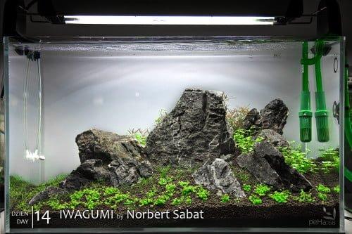 Iwagumi - day 14