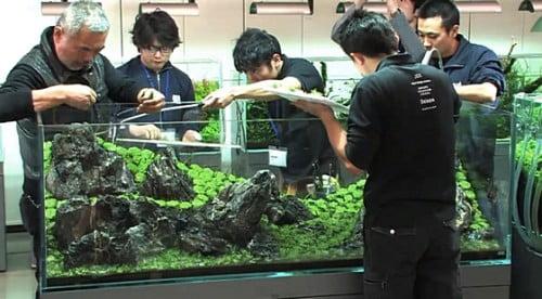 Rok w Nature Aquarium Gallery