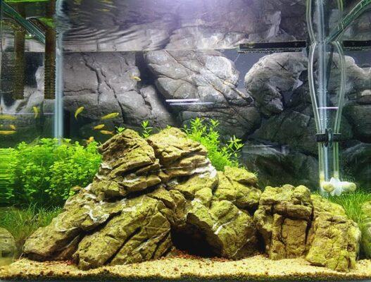 Nano Nature Aquarium