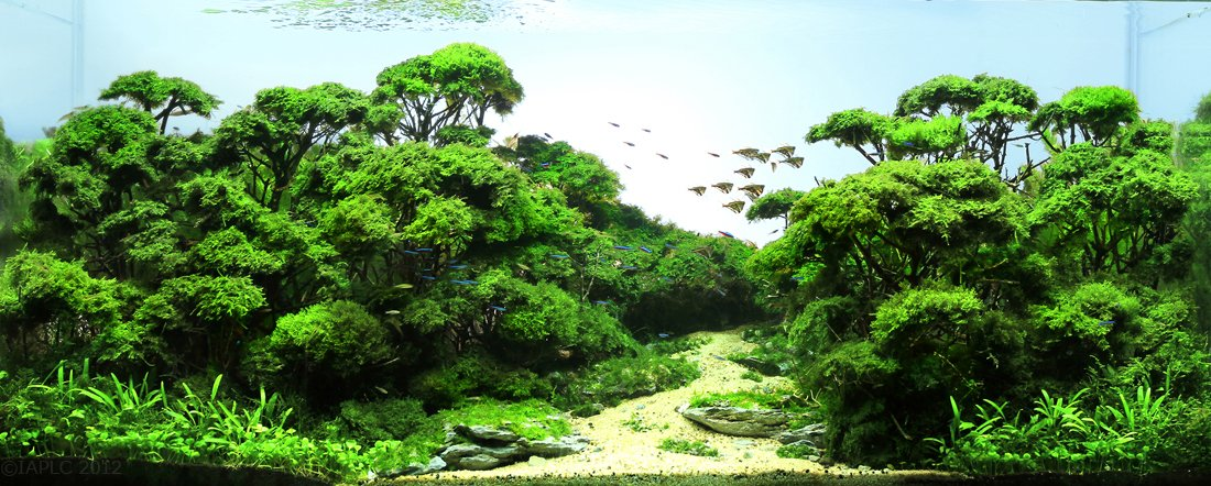Iaplc 2012 top7 aquascaping world forum Aquarium landscape