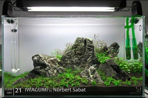 Iwagumi - Norbert Sabat - Day 21