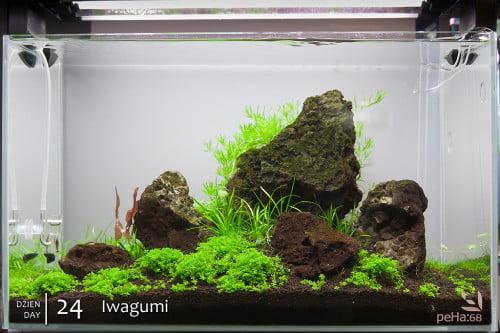 Optiwhite 60x30x36cm - Iwagumi