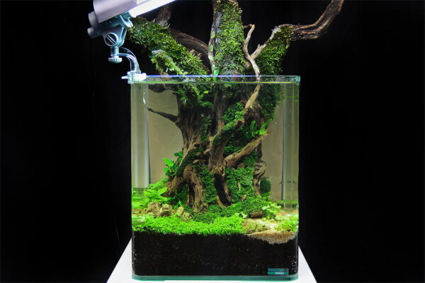 The Art of the Planted Aquarium 2013  – Wyniki