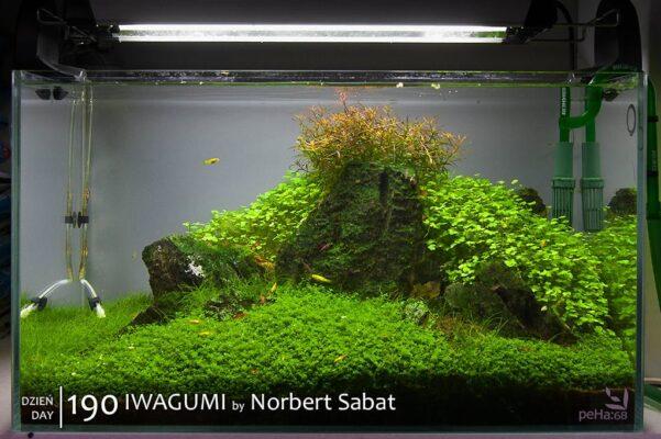 Iwagumi By Norbert Sabat – Day 190