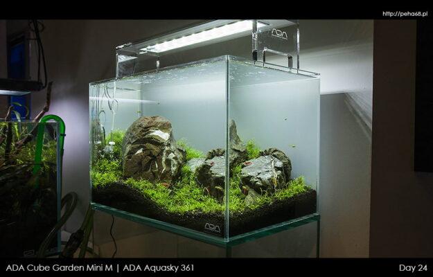 ADA Mini M i Aquasky – Dzień 24