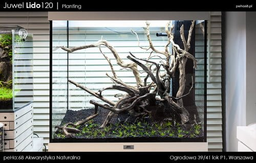 Lido 120 - Planting