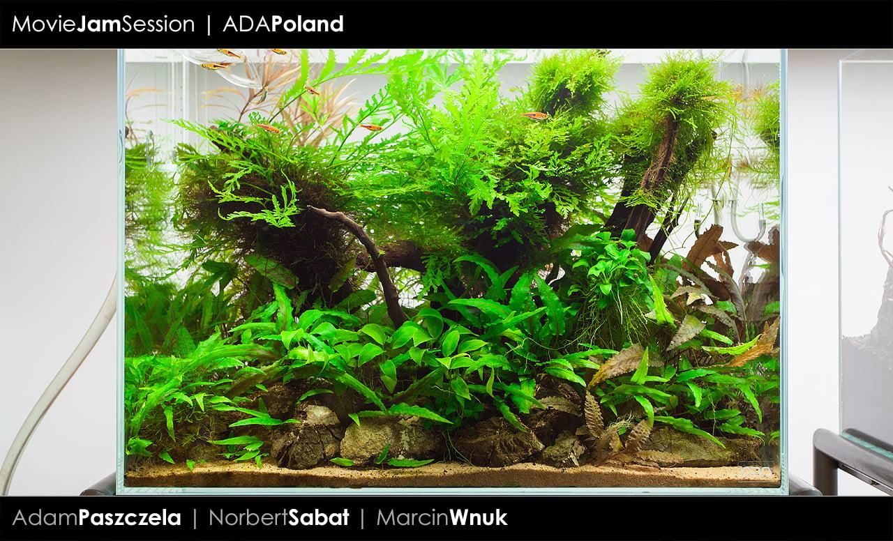 Wonderful ADA Cube Garden 60H