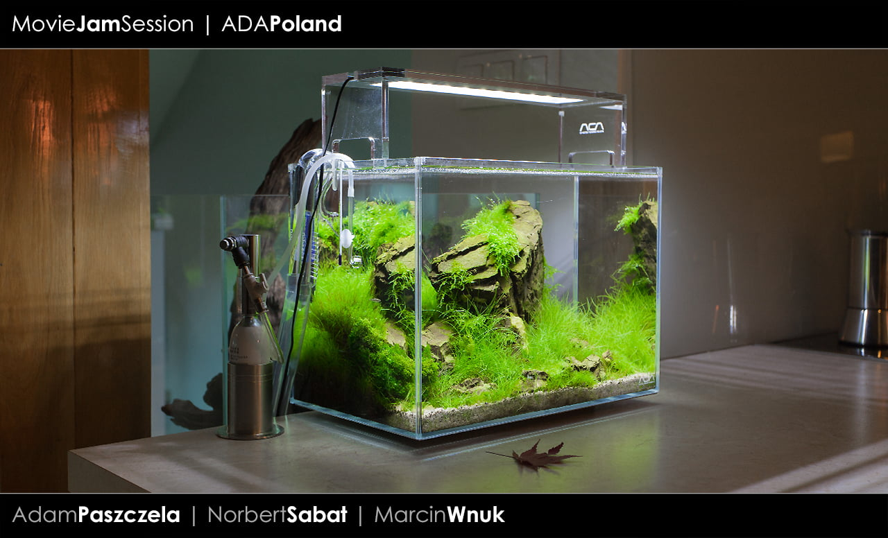 Akwaria Ada Poland 02 2014 Peha 68 Akwarium W Stylu
