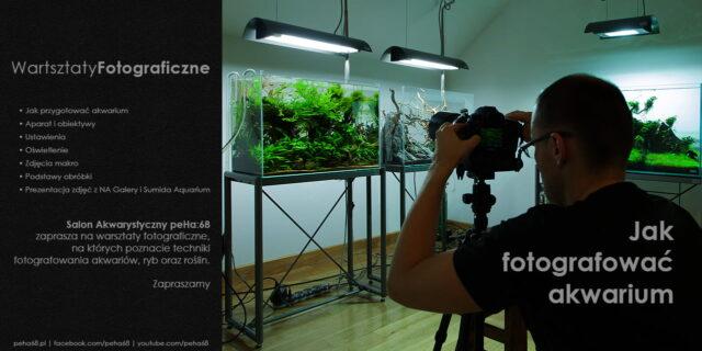 Jak fotografować akwarium – Warsztaty