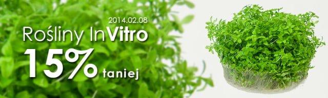 promocja rośliny in vitro