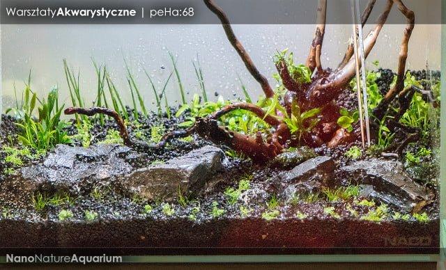 Warsztaty akwarystyczne - Nano Nature Aquarium 024