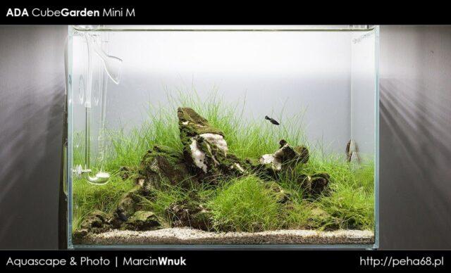 ADA Mini M – Dzień 88