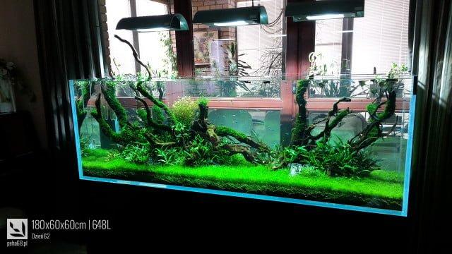 Akwarium Naturalne 648L