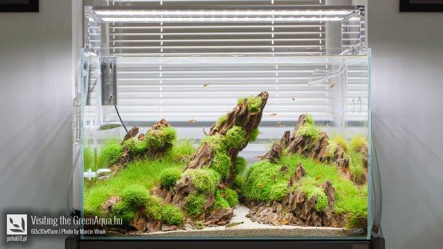 Green Aqua 001