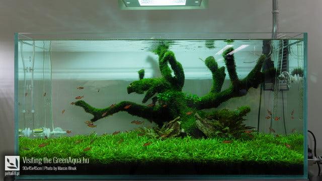 Green Aqua 002