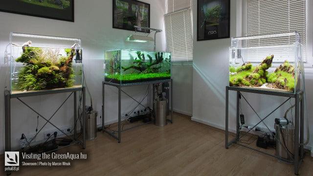 Green Aqua 004