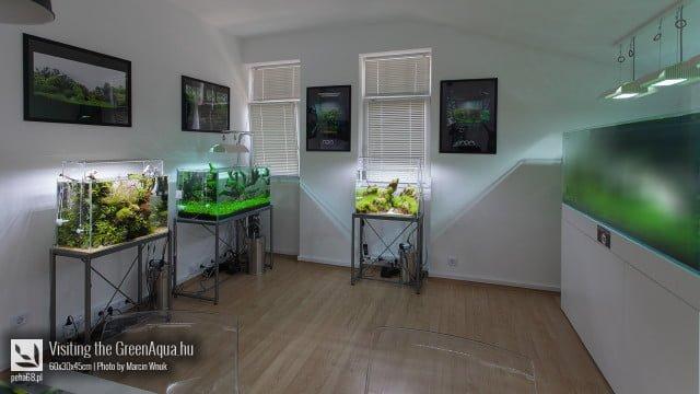 Green Aqua 007