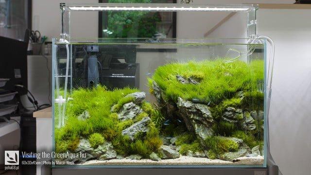 Green Aqua 008