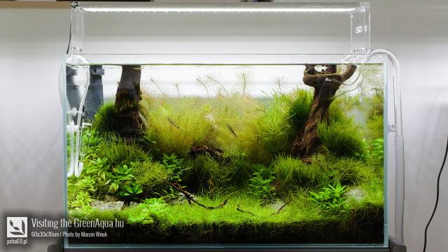 Green Aqua 009