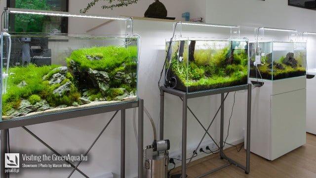 Green Aqua 010