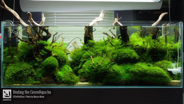 Green Aqua 013