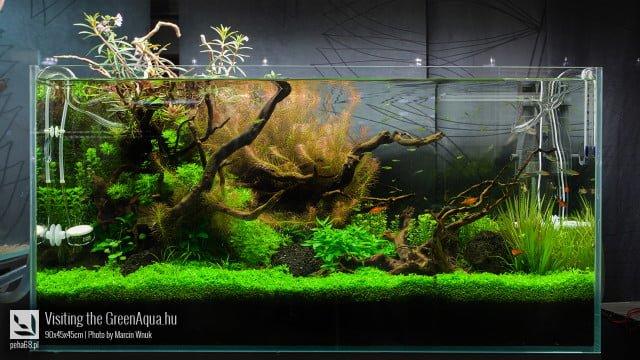 Green Aqua 014