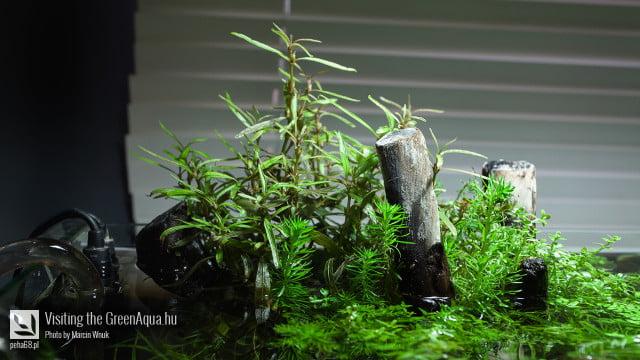 Green Aqua 017