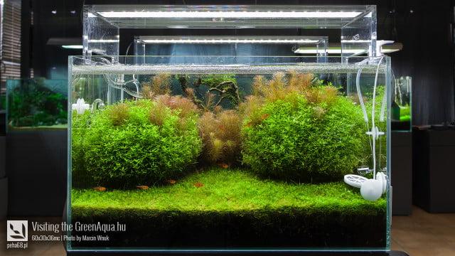 Green Aqua 024