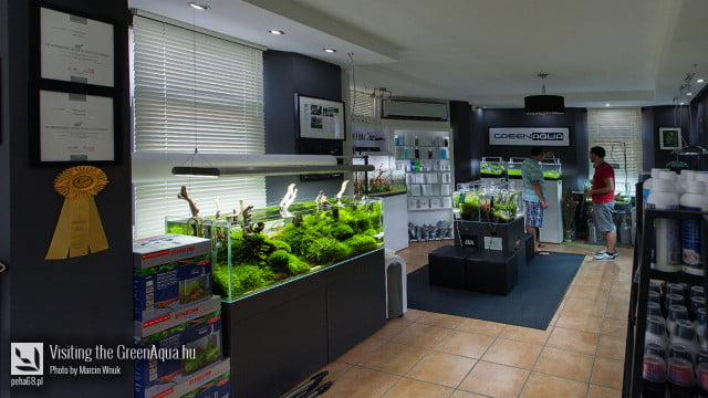 Green Aqua 030