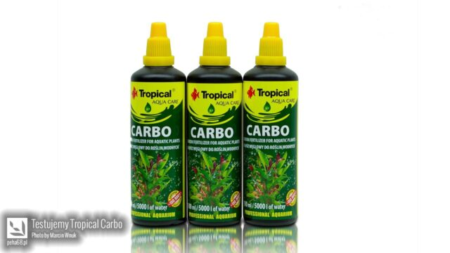 Tropical Carbo