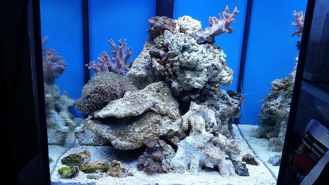 Aquael Nano Reef