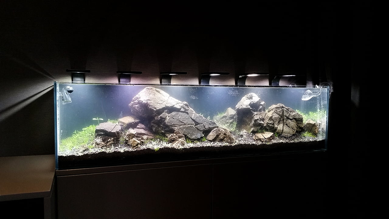 Akwarium NACD 117x28x30cm - Day 1