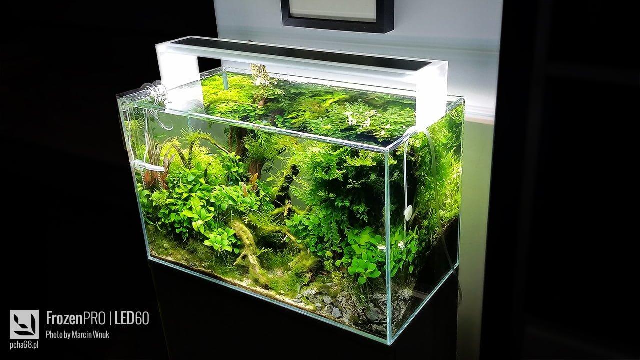 Oświetlenie Akwarium Peha68 Akwarium W Stylu Naturalnym