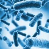 Bakterie nitryfikacyjne