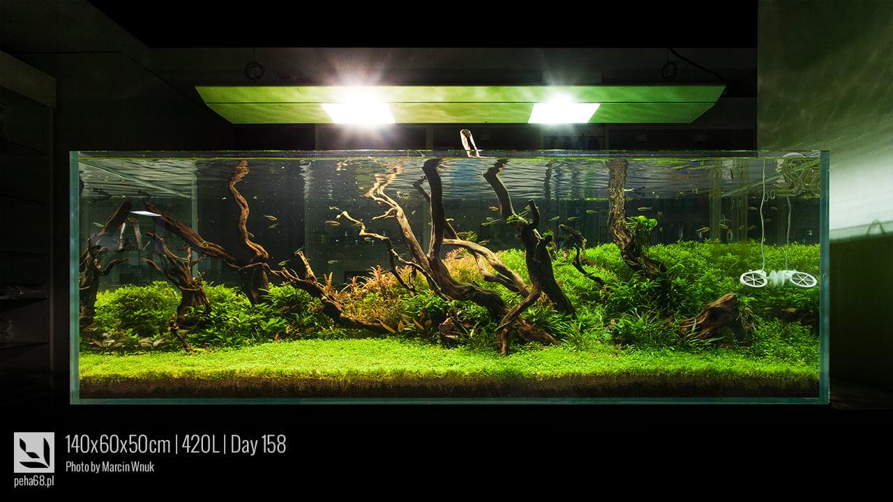 140x60x50cm 420L - Day 158