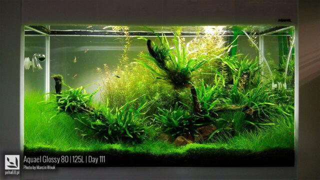 Aquael Glossy 80 – 125L