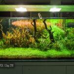 Style w akwarium naturalnym