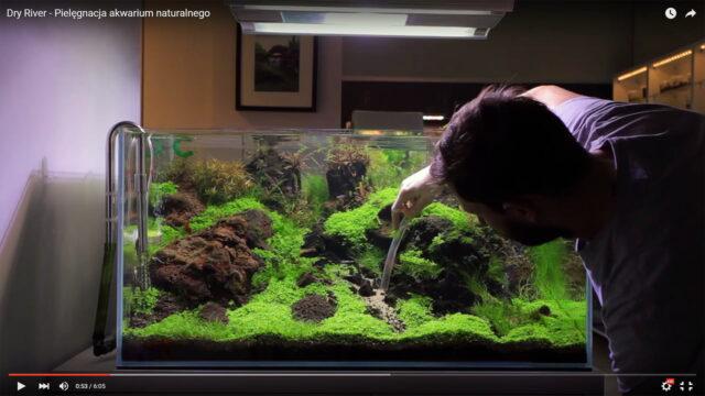 Dry River – Pielęgnacja akwarium – film
