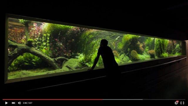 Akwaria w Warszawskim Zoo – film