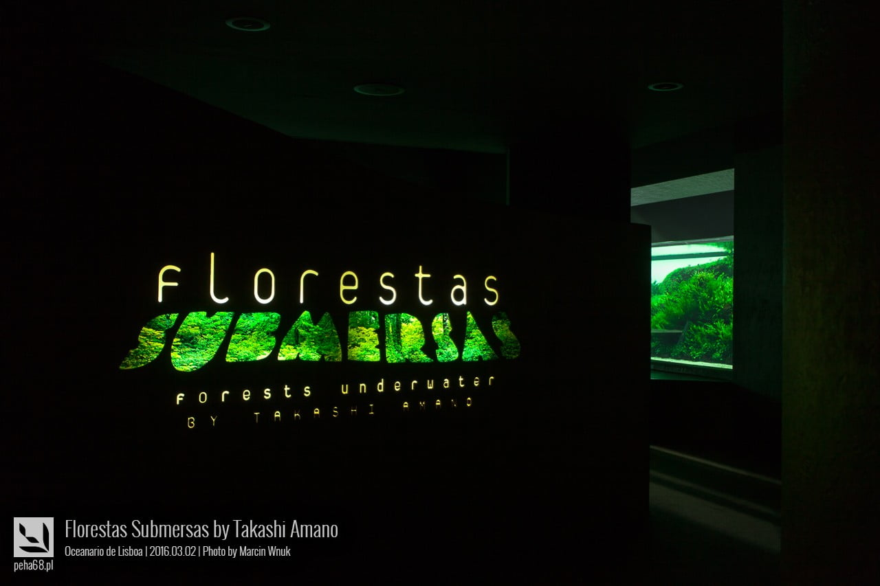 Forest Underwater by Takashi Amano (Florestas Submersas)
